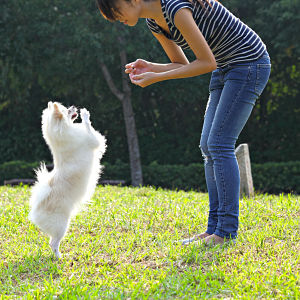 Small Fluffy Dog Training