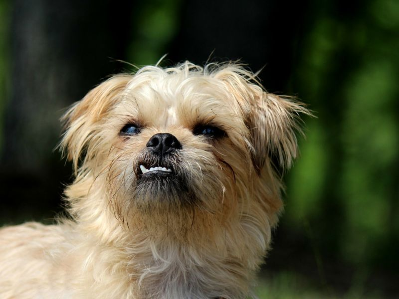 Cute Small Dog Breeds (THE CUTEST SMALL DOGS)