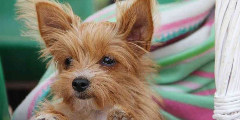Cute Small Dog Breeds