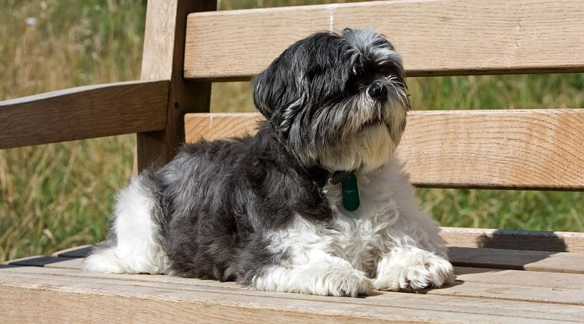 Dog Breeds That Will Be Your Best Friend