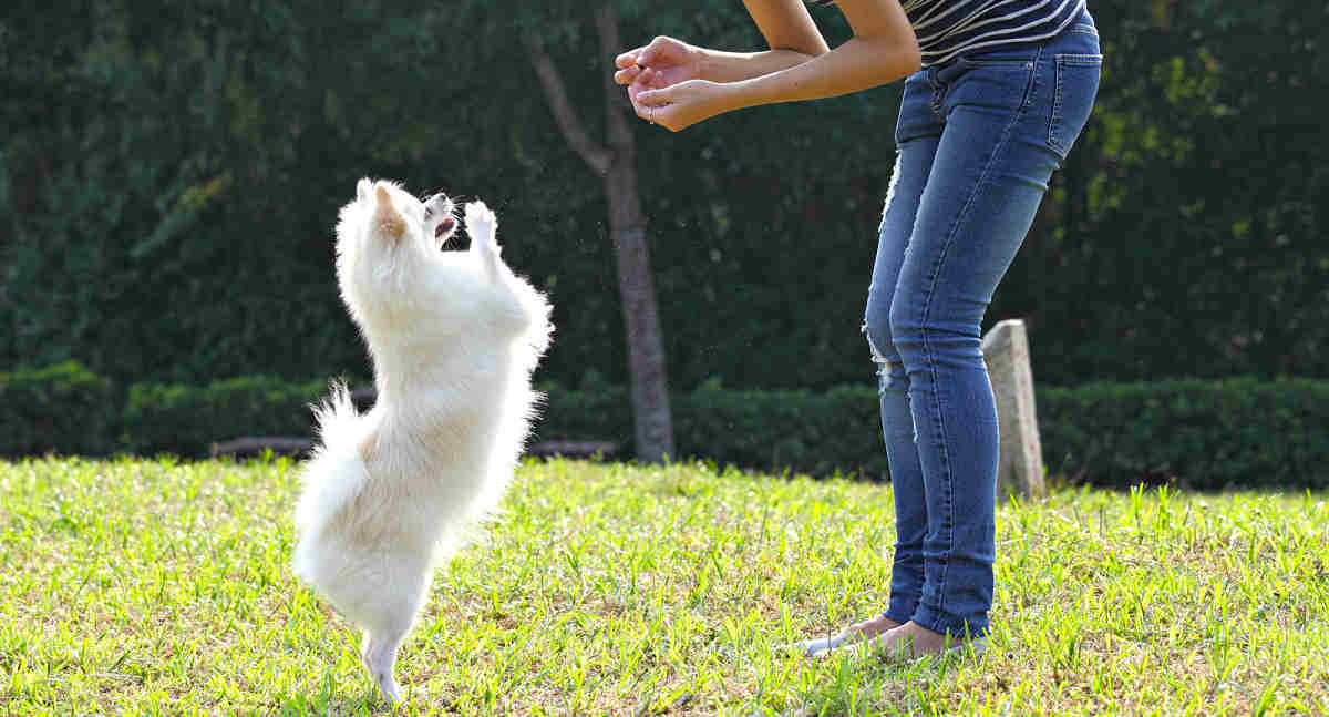 Dog Training Tips
