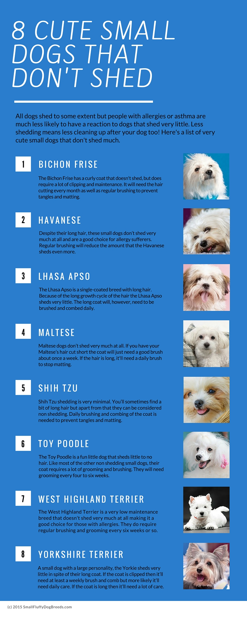 A List Of Small Dog Breeds