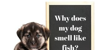 Why Does My Dog Smell Like Fish?