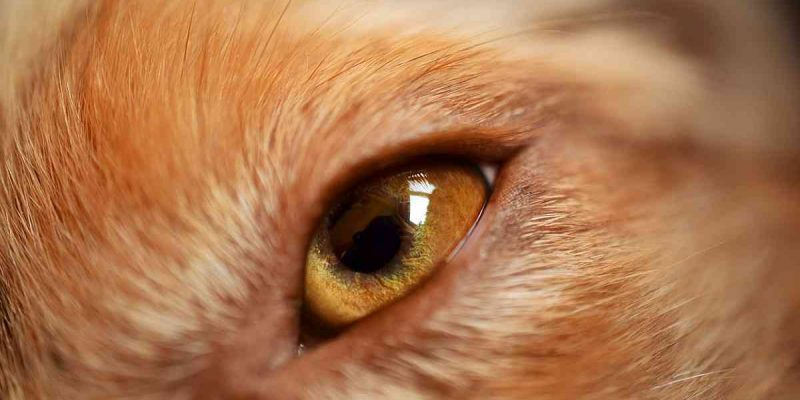 Dog Eye Infection Causes, Prevention And Treatment