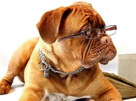 Interesting And Fun Facts About Dogs For Kids
