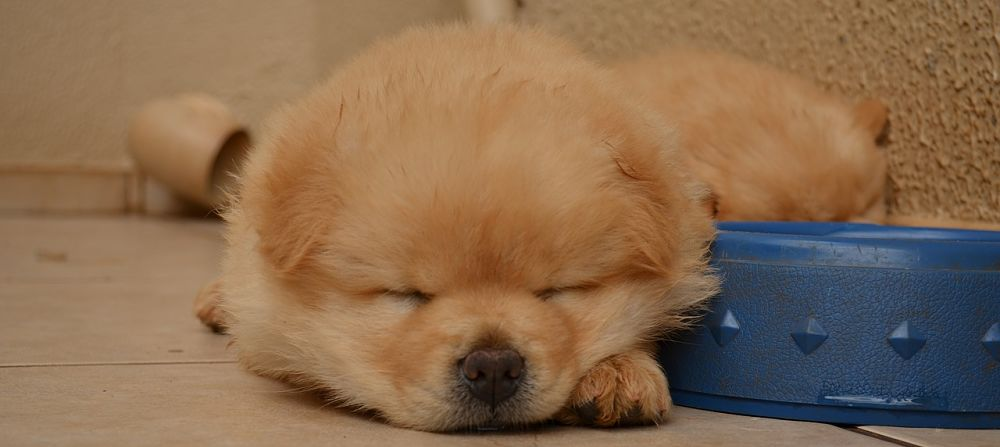 Melatonin For Dogs