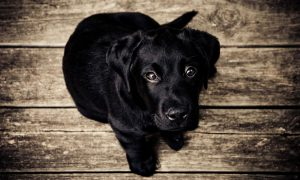 Tips For Choosing A Dog