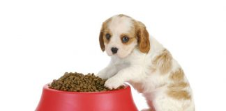 Weaning Puppies - How And When To Wean