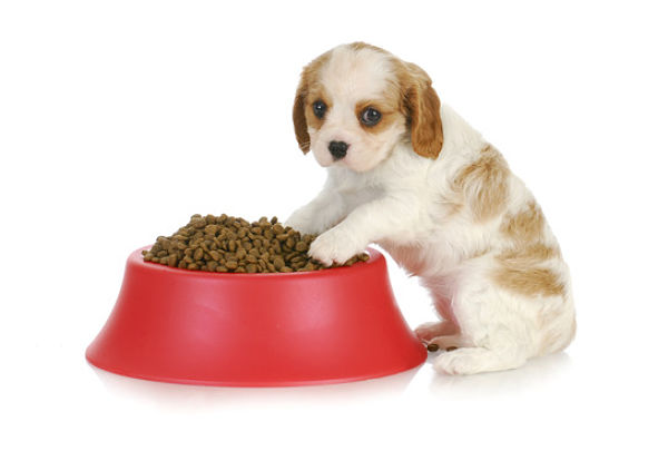 Weaning puppies is the process of switching puppies from their mothers' milk to solid food. Learn how and when to wean puppies.