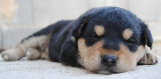 Worming Puppies