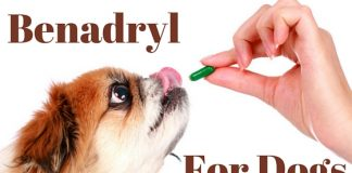 Is Benadryl For Dogs Safe?