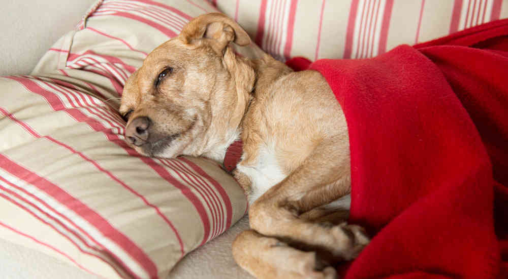 Is Kennel Cough Dangerous For Dogs