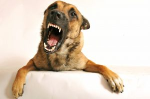 Dog Aggression Training Strategies