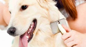 Dog Coat Health Care Benefits