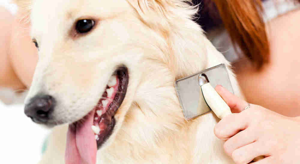 The benefits of dog coat health care.