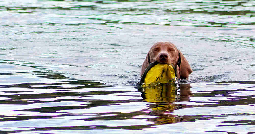 Water-Based Dog Games