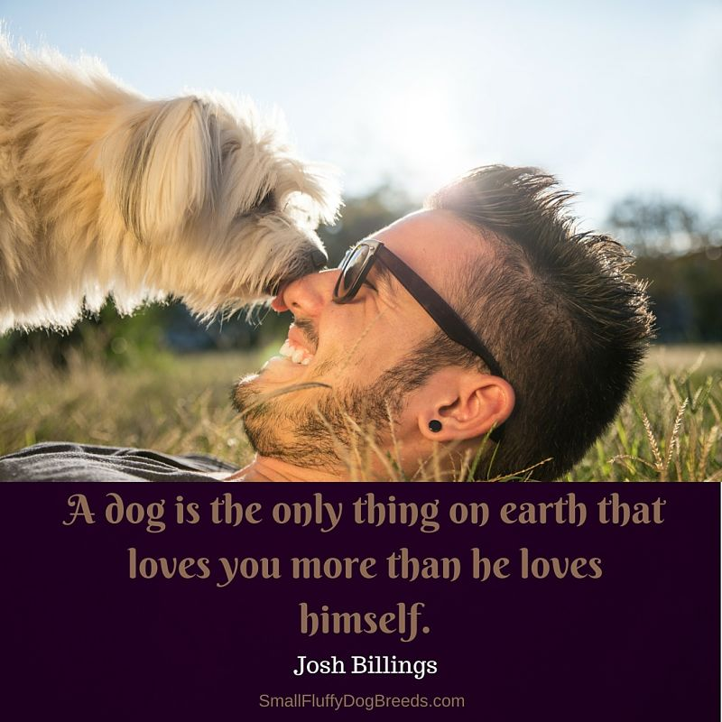 Quotes about dogs: A dog is the only thing on earth that loves you more than he loves himself - Josh Billings quote