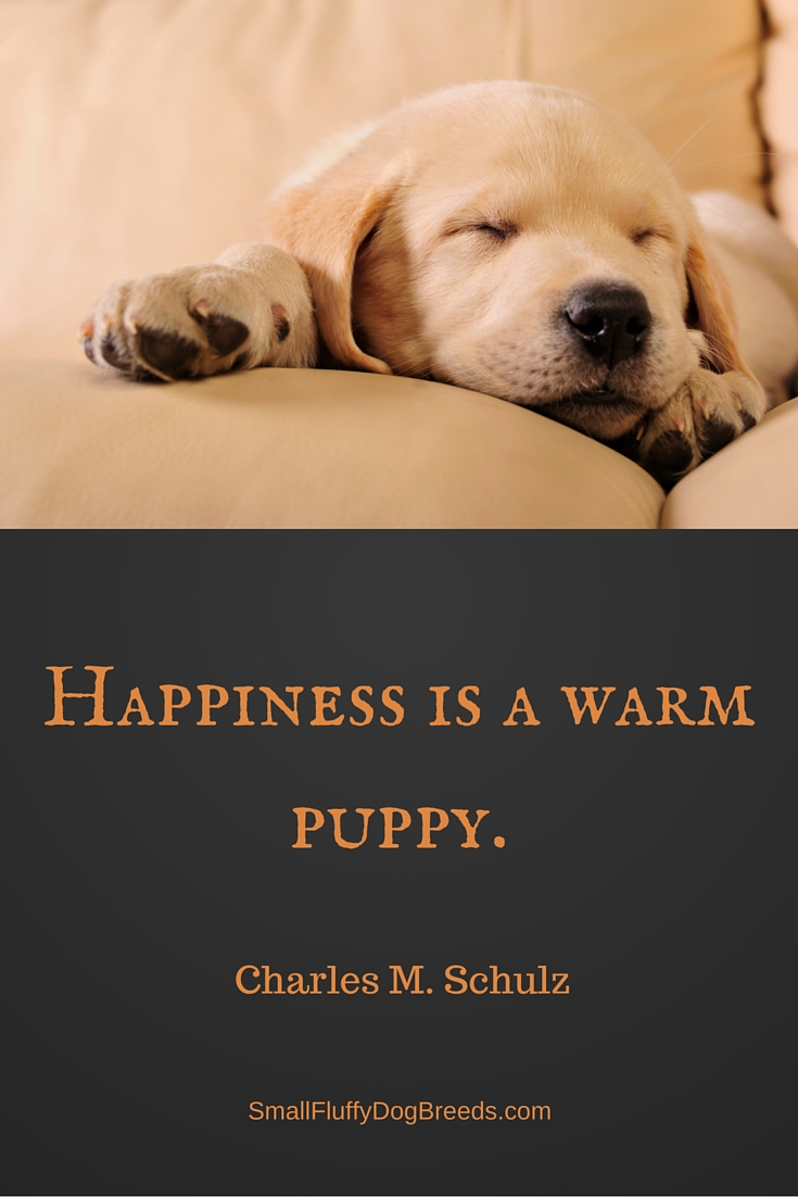 Happiness is a warm puppy - Charles Schulz quote