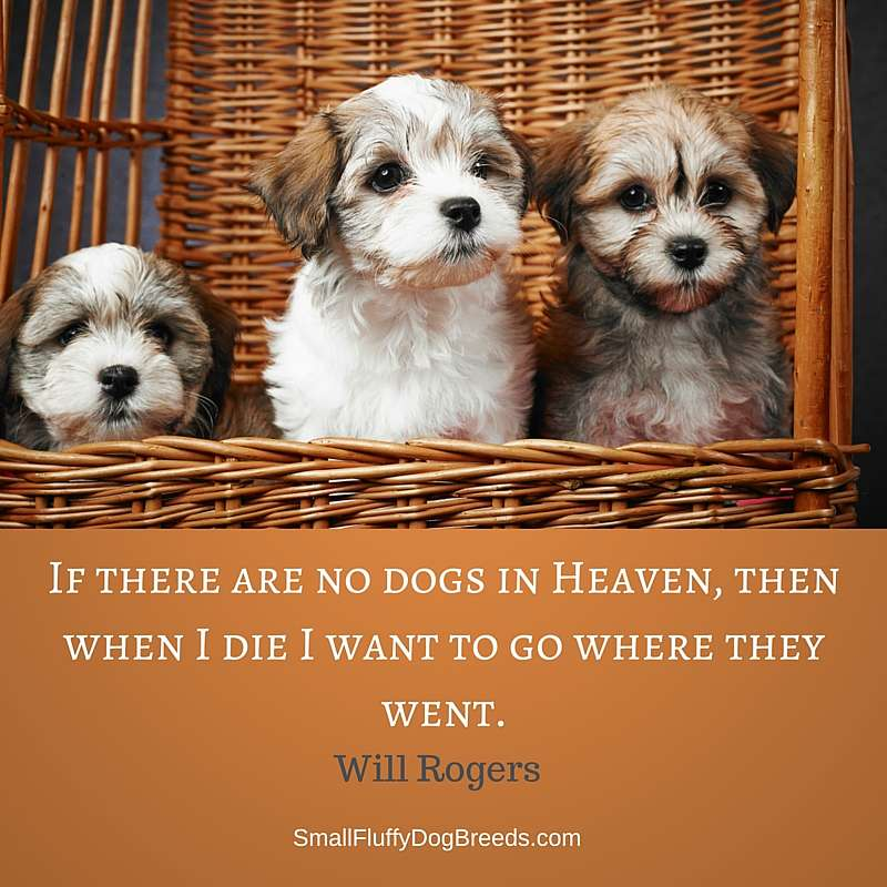 Dog quotes: If there are no dogs in Heaven, then when I die I want to go where they went - Will Rogers