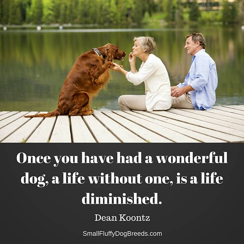 Once you have had a wonderful dog, a life without one, is a life diminished - Dean Koontz quote