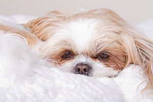 Separation anxiety in dogs and how to stop them suffering from it.