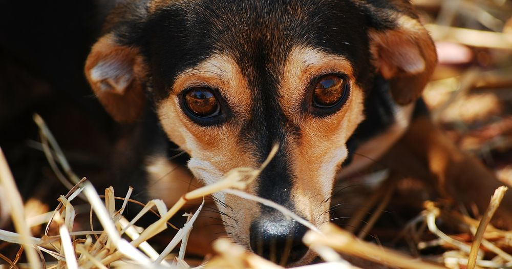 How To Stop Separation Anxiety In Dogs