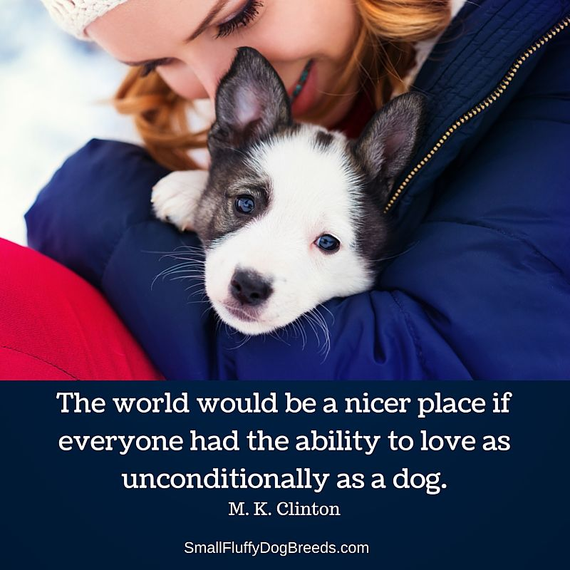 The world would be a nicer place if everyone had the ability to love as unconditionally as a dog - M. K. Clinton quote