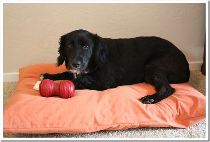diy dog bed ideas great home made dog beds