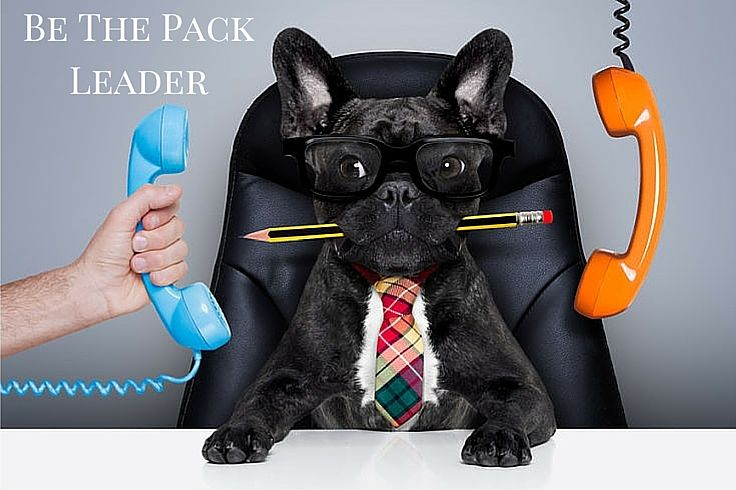 It's vital that you know how to be pack leader. You must let your dog know that you're the one who's in charge.