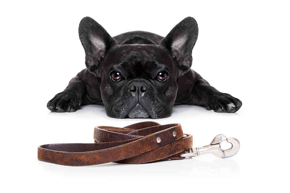Here are some tips on how to stop a dog pulling on the leash.