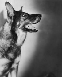 Famous Dogs In History - Rin Tin Tin