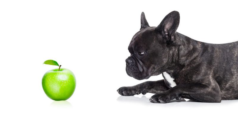 Can dogs eat apples and apple peel?