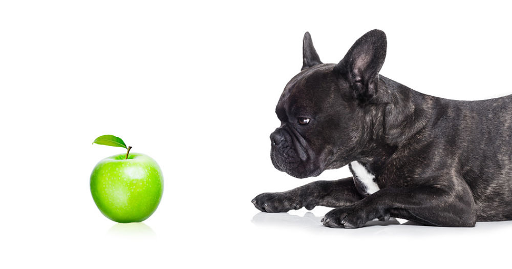 We know apples are tasty, and we know they are incredibly good for humans, but what about dogs? Can dogs eat apples and apple peel?
