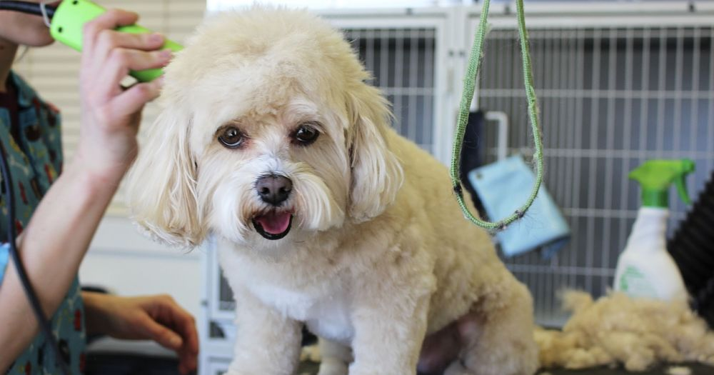 Here are some tips to reduce dog shedding.
