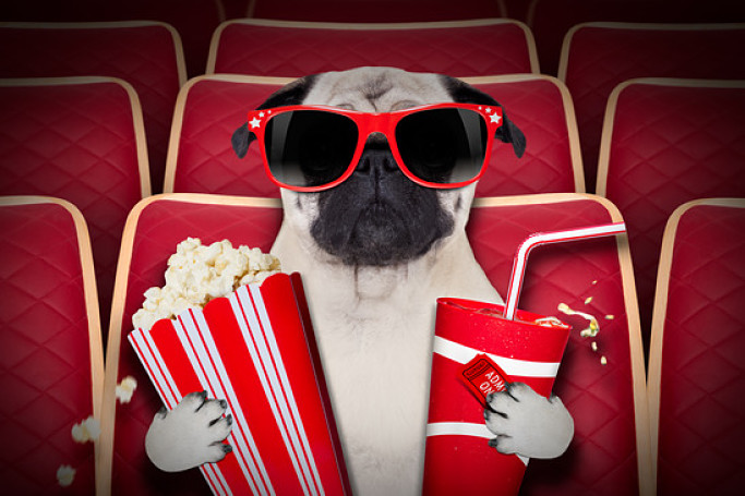 People like to watch movies while they sit on their couch munching on their popcorn. But should you share popcorn with your dog, i.e. can dogs eat popcorn?
