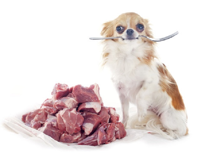 Dog Diet And Nutrition