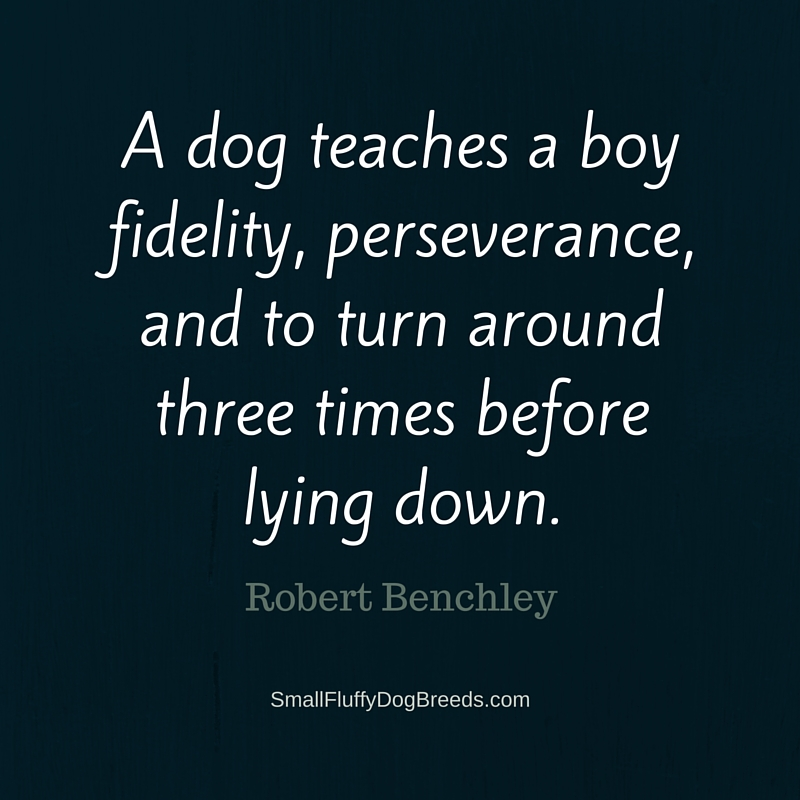 A dog teaches a-boy Robert Benchley funny dog quote