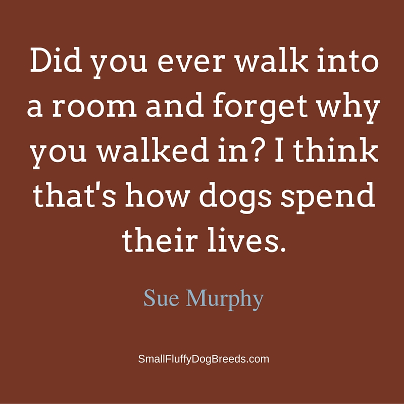 Did you ever walk into a room and forget why you walked in? I think that's how dogs spend their lives - Sue Murphy