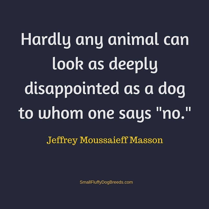 Hardly any animal Jeffrey Moussaief Masson quote