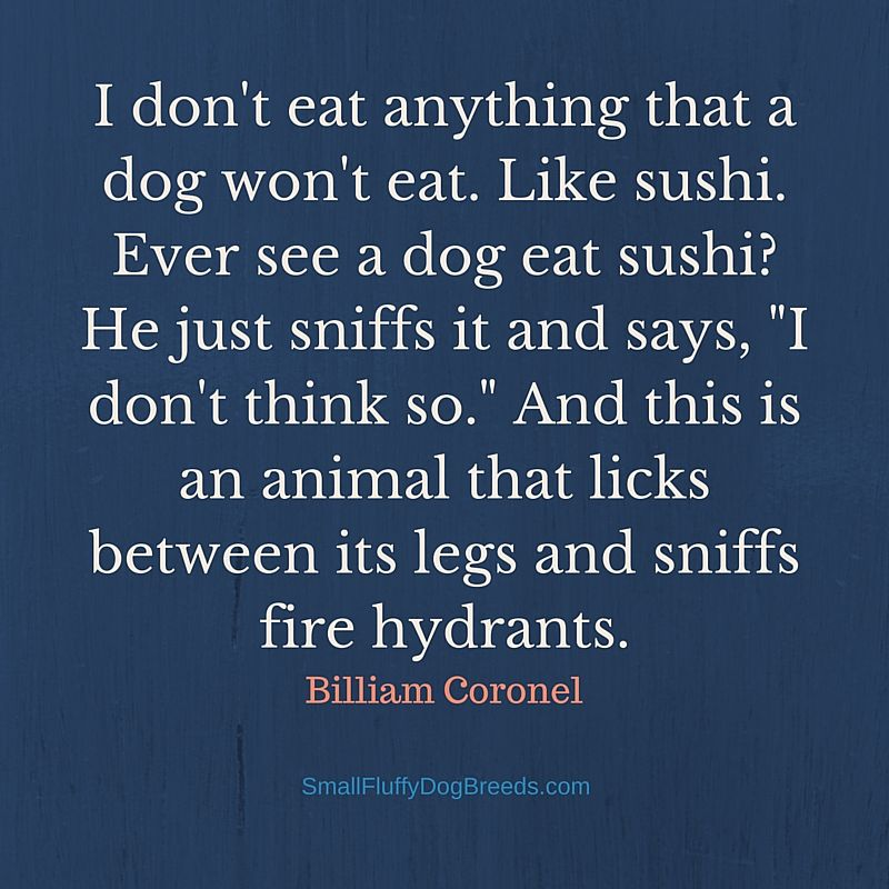 I don't eat anything that a dog won't eat - Billiam Coronel funny dog quote