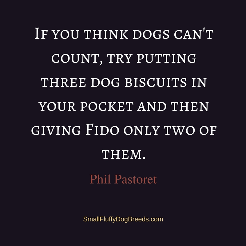 If you think dogs can't count - Phil Pastoret funny dog quote