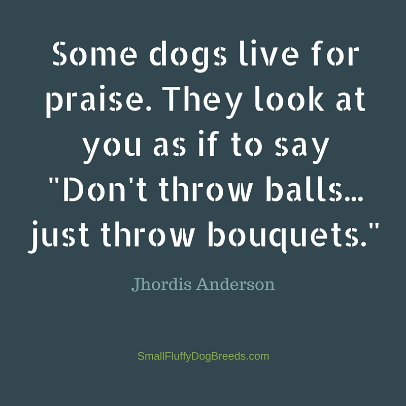 Funny dog sayings: Some Dogs Live For Praise - Jhordis Anderson