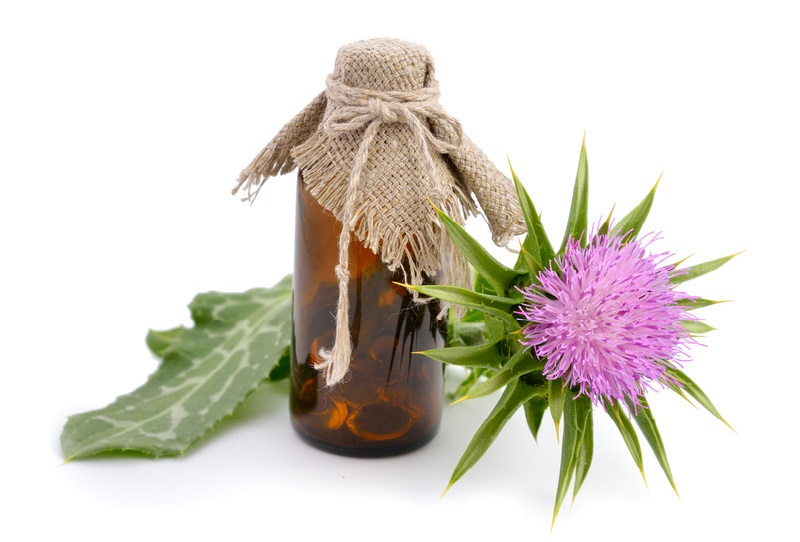 The benefits of milk thistle for dogs