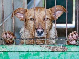 Puppy Mills Facts And Figures