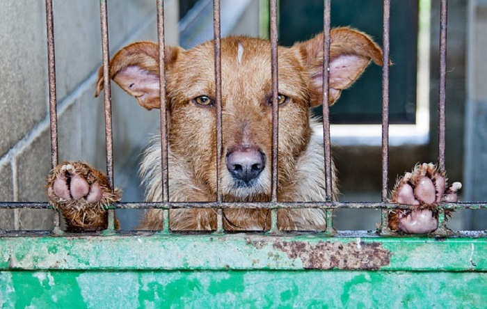 If you're thinking of getting a puppy from a puppy mill, you should consider these puppy mills facts and figures first.