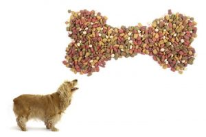 The Best Dog Food For Your Dog