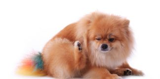 Symptoms And Causes Of Dog Food Allergies