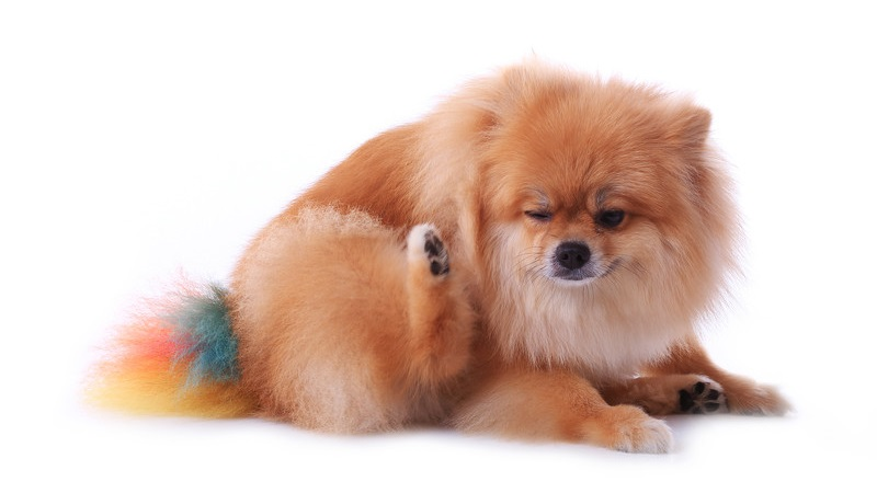 Dog Food For Allergy Prone Dogs