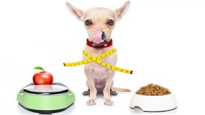 Dog Weight Loss - How To Help Your Dog Lose Weight