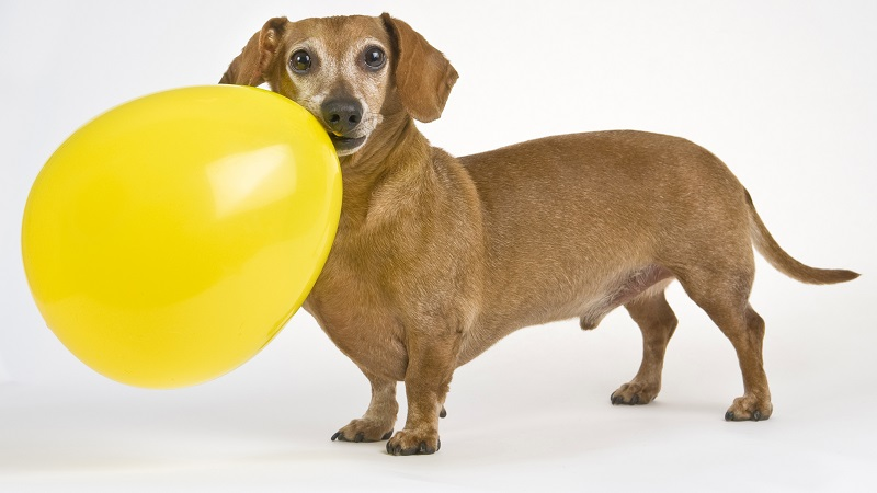 Toys For Small Dogs